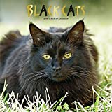 Black Cats 2019 12 x 12 Inch Monthly Square Wall Calendar with Foil Stamped Cover, Animals Cats