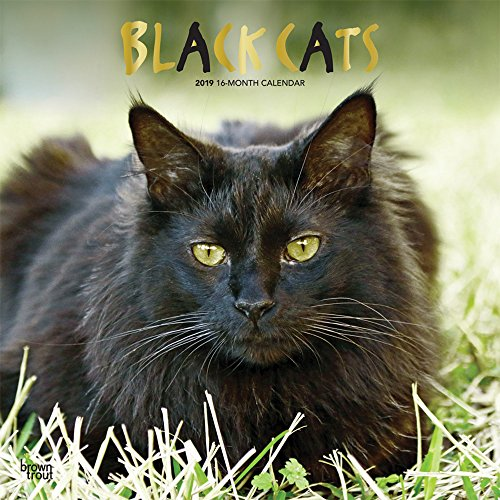 Black Cats 2019 12 x 12 Inch Monthly Square Wall Calendar with Foil Stamped Cover, Animals Cats (Multilingual Edition)