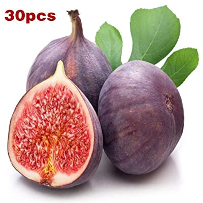 Xixou 50pcs/ Bag Fig Tree Seeds Home Garden Courtyard Fruit Tree Plants Fruits : Garden & Outdoor