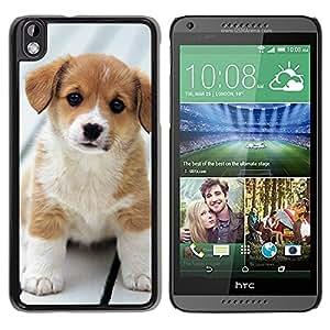 TopCaseStore / la caja del caucho duro de la cubierta de protección de la piel - Baby Puppy Golden Retriever Labrador - HTC DESIRE 816