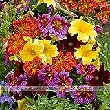 100pcs/Salpiglossis Sinuata seeds. Painted Tube Tongue Velvet Trumpet Flower seeds .Home & Garden plants Aroma Flower