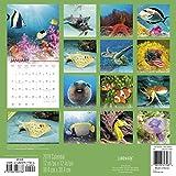 2018-Our-Oceans-Wall-Calendar-Landmark