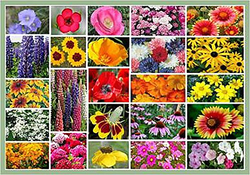 Midwest Mix of Wildflower Seeds - Annuals and Perennials .3 Oz.