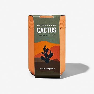 Modern Sprout Terracotta Kit Cactus: Garden & Outdoor