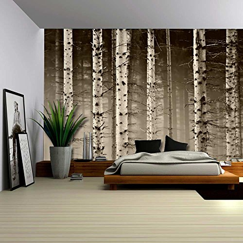 Wall26 - A Close Up View of a Birch Tree Forest - Wall Mural, Removable  Sticker, Home Decor - 100x144 inches