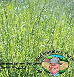 Premium Winter Rye Grass Seeds - 10 LBS by Old Cobblers Farm