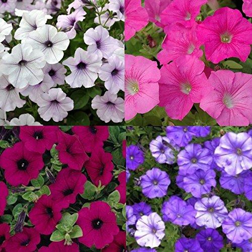 eeds 4 Different Varieties 800 Seeds ()