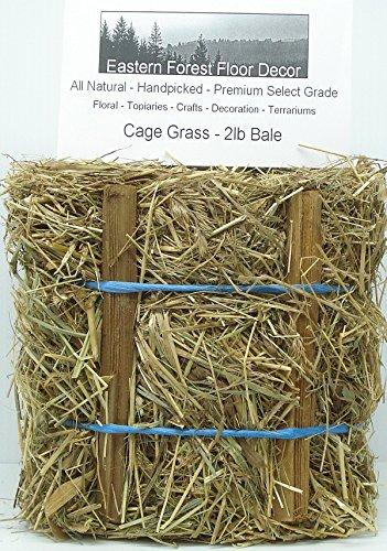 Oregon Coast Cage Grass 2 pound bale