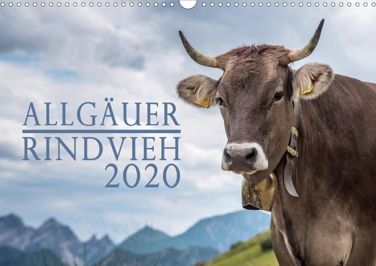 Allgäuer Rindvieh 2020  Wandkalender 2020 DIN A3 Quer