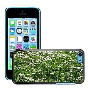 Print Motif Coque de protection Case Cover // M00290792 Margarita blanca fiebre del Prado // Apple iPhone 5C