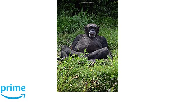 Notebook Cool Laid Back Chimpanzee: Wild Pages Press