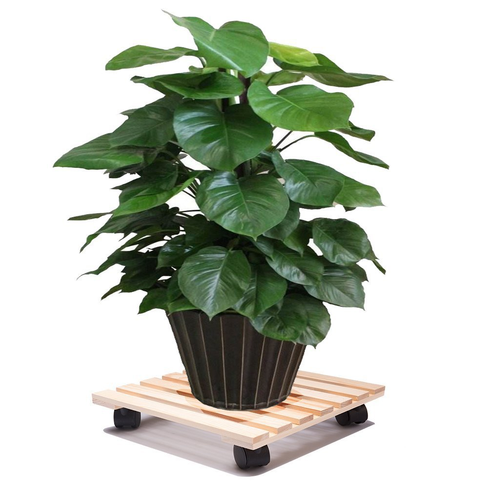 Tosnail 12'' Square Wooden Plant Caddy Plant Stand with 4 Wheels (2 with Locking Caster) by Tosnail