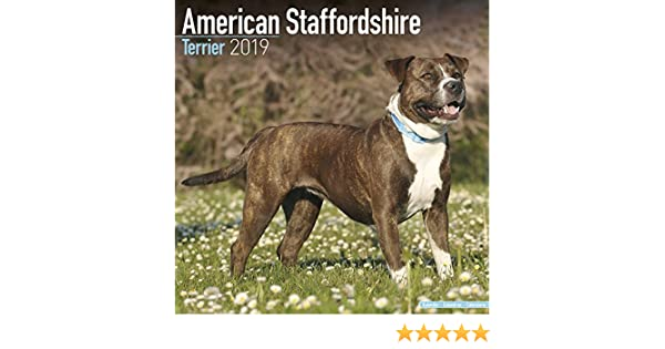 Eli Pitbull Puppies For Sale 2018