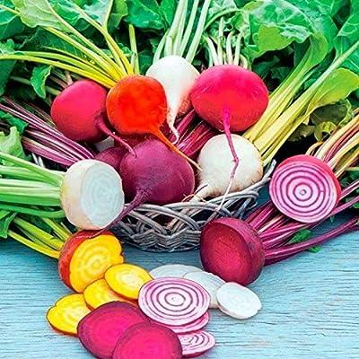 Rainbow Beet Blend Mixed Seeds (25 Seeds) : Garden & Outdoor