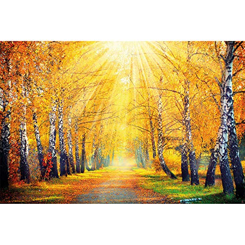 Great Art Wall Decoration Autumn Photo Wallpaper - Autumnal Forest Mural Golden Park Nature Poster Fall Colors (55 Inch x 39.4 Inch)]()