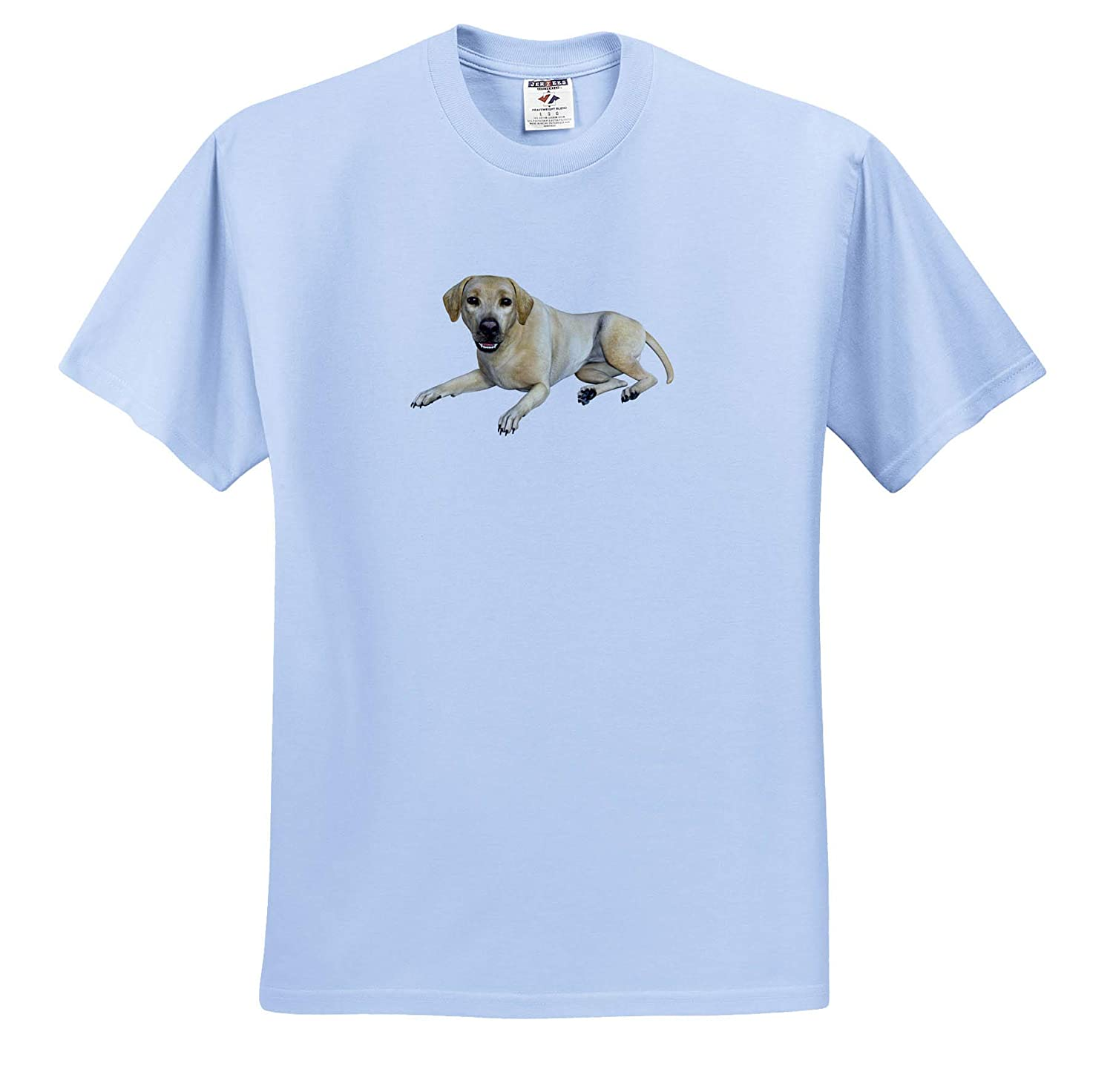 T-Shirts Labrador Beige Lying Down and Looking Forward 3dRose Boehm Graphics Dog