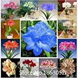 Promotion Amaryllis seeds, free shipping cheap Amaryllis seeds, Barbados lily potted seed, Bonsai balcony flower seeds - 100 pcs