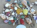 NiuXTool Sea Shells Mixed Beach Seashells - 500 Gram! Various Sizes Up to 4''! More Than 20 Models Mixed! Perfect for Home Wedding Decor, Fish Tank and Vase Fillers.
