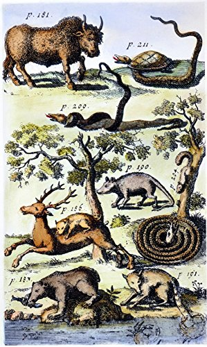 North America Fauna Nengraved Frontispiece From The 1712 German Edition Of John LawsonS A New Voyage To Carolina Showing A Buffalo A Terrapin Killing A Rattlesnake A Blacksnake Killing A Rattlesnake A