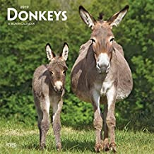 Donkeys 2019 Square Wall Calendar