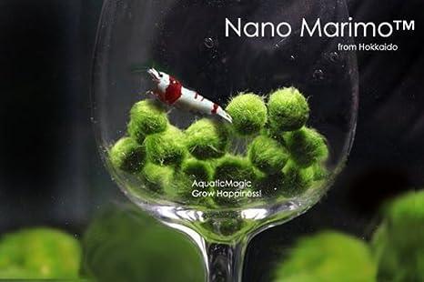 Bolas de musgo Marimo Luffy Nano, 6 unidades Planta acuática viva para acuario