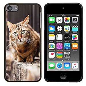 EJOOY---Cubierta de la caja de protección para la piel dura ** Apple iPod Touch 6 6th Touch6 ** --Furry Casa del gato de pelo corto británico calle