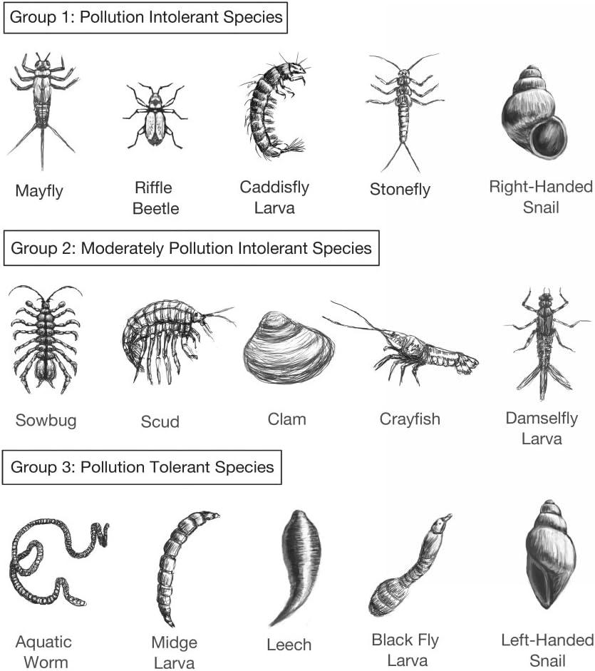 Amazon.com: Posterazzi Poster Print Collection Macroinvertebrates Chart  Pollution Tolerance Spencer Sutton/Science Source, (18 x 24), Multicolored:  Posters & Prints