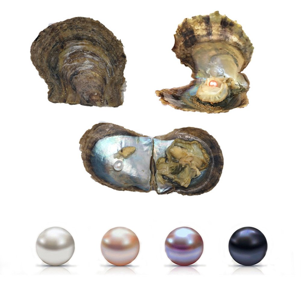 Saltwater Pearl Oyster, 4 PCS Love Wish Saltwater Akoya Pearl Oyster 6-7mm Pearl Inside for Jewelry Making or Birthday Gifts by Zotoone