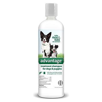Ventaja AG Ventaja Tratamiento Shamp Perro Martillo: Amazon.es: Productos para mascotas