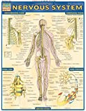 Nervous System (Quickstudy: Academic)