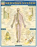 Complete, labeled illustrations of the nervous system. From pre-teen to pre-med, this chart is loaded with beautifully illustrated diagrams, clearly and concisely labeled for easy identification. Illustrations by award-winning medical illustrator Vin...