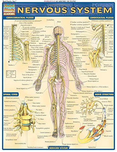 Nervous System (Quick Study Academic) Pamphlet – January 2, 2001 Inc. BarCharts QuickStudy 1572224983 Anatomy