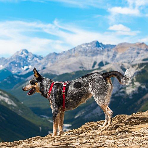 Image of Kurgo Journey Multi-Use Dog Harness, Reflective Harness, Dog Running Harness, Dog Walking Harness, Dog Hiking Harness, Red/Grey, Medium