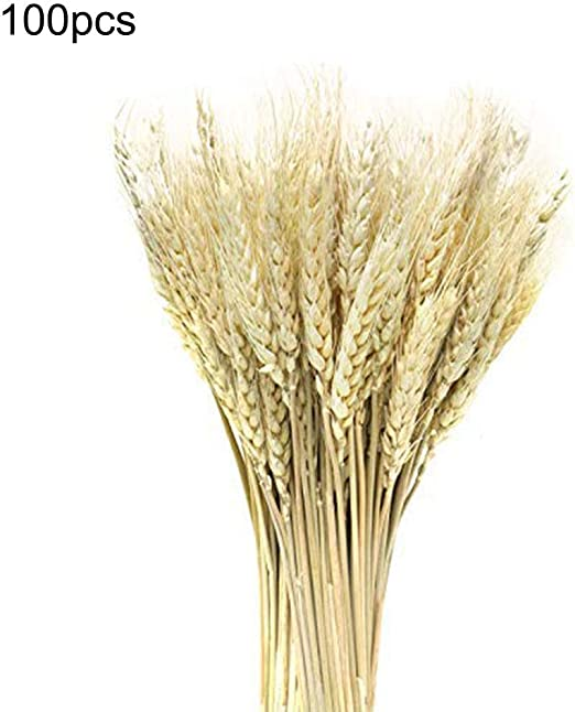 1 Bouquet Purple Natural Dried Wheat Flowers Home Decor Barley Dried Flowers