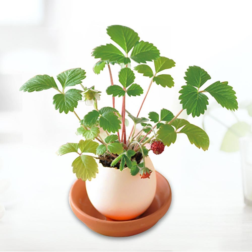 Green HuntGold2 Mini Novelty Cute Lucky Egg Shaped Potted Plants Egg Hatches Plant Desktop Decor Gift