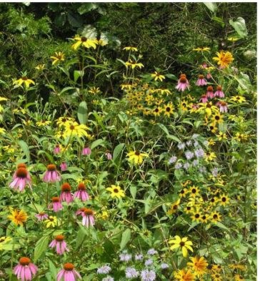 woodland-edge-part-shade-mix-mix-134-1250-certified-pure-live-seed-true-native-seed