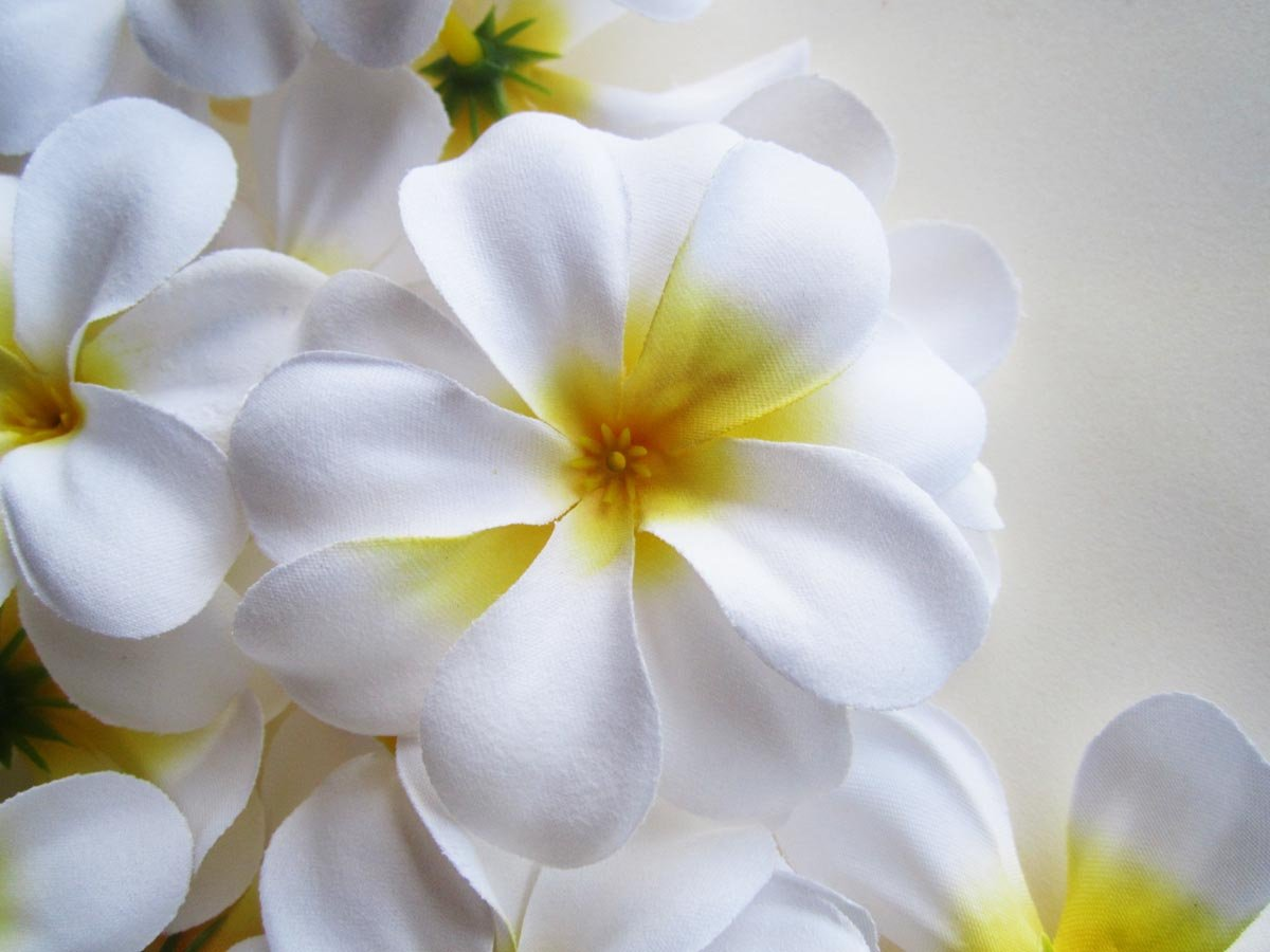 Amazon 12 White Hawaiian Plumeria Frangipani Silk Flower