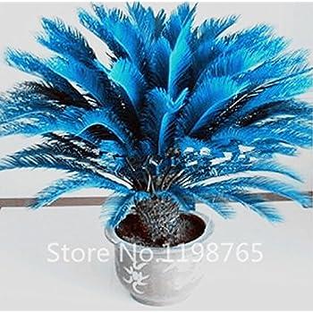 100pcs bag blue cycas seeds sago palm tree flower seeds the budding. Black Bedroom Furniture Sets. Home Design Ideas