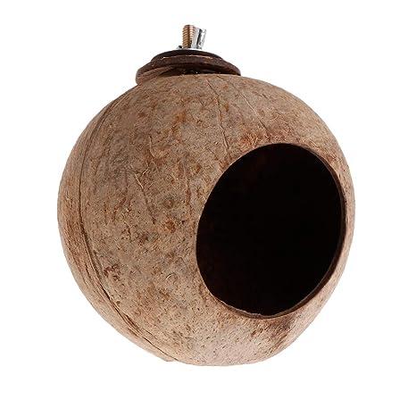 Mentin de Nido de pájaro en Nuez de Coco Natural Juguete de ...