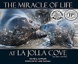 The Miracle of Life At La Jolla Cove