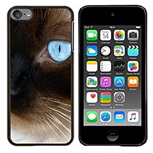 TECHCASE---Cubierta de la caja de protección para la piel dura ** Apple iPod Touch 6 6th Touch6 ** --Siamés azul persa Eye Bigotes Coches