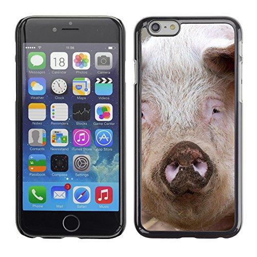 "Premio Sottile Slim Cassa Custodia Case Cover Shell // F00027669 pig Staring // Apple iPhone 6 6S 6G 4.7"""