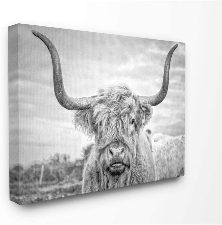 Stupell Industries Black and White Highland Cow Photograph Canvas Wall Art, 30 x 40, Design by Artist Joe Reynolds