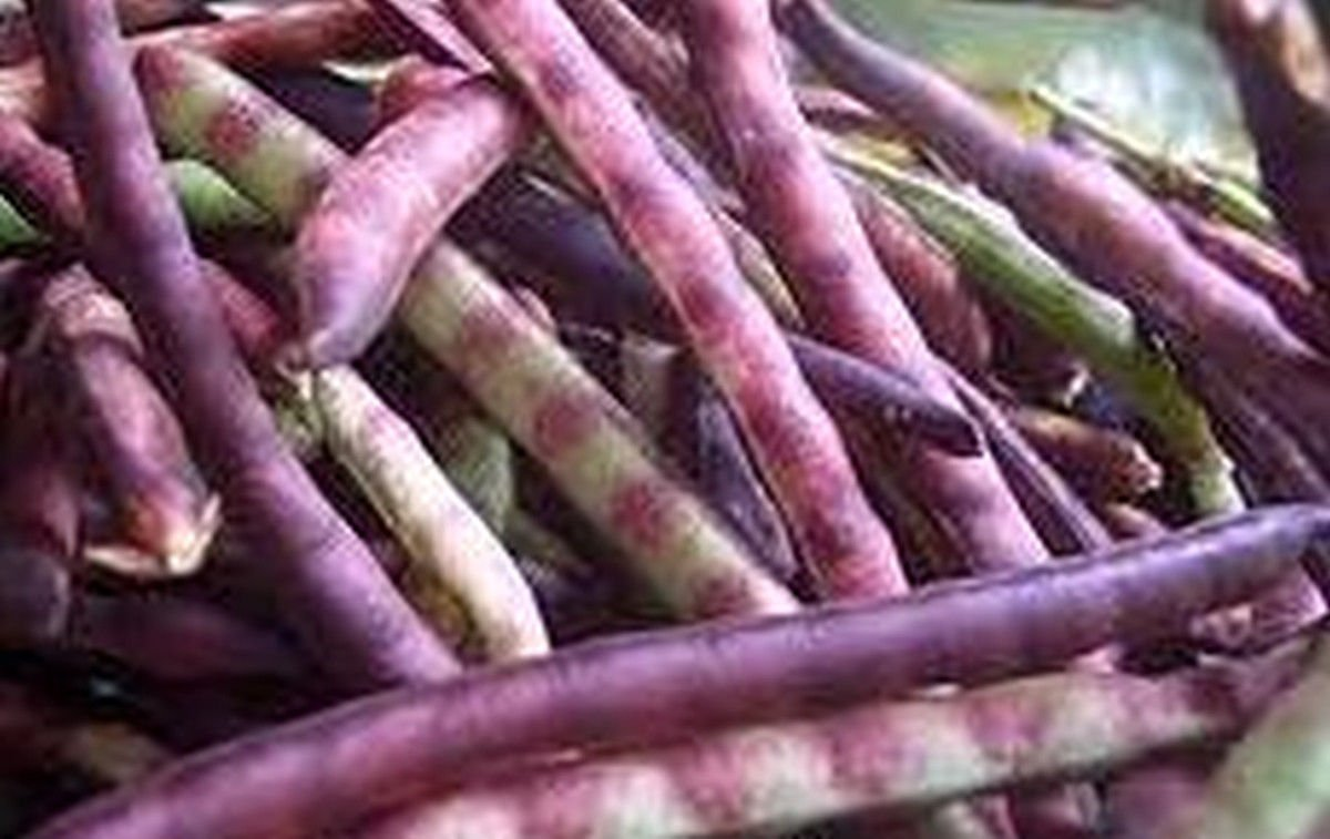 25 Seeds Top Pick Pinkeye Cowpea - Pods At the Top of the Plant!!great Yields!