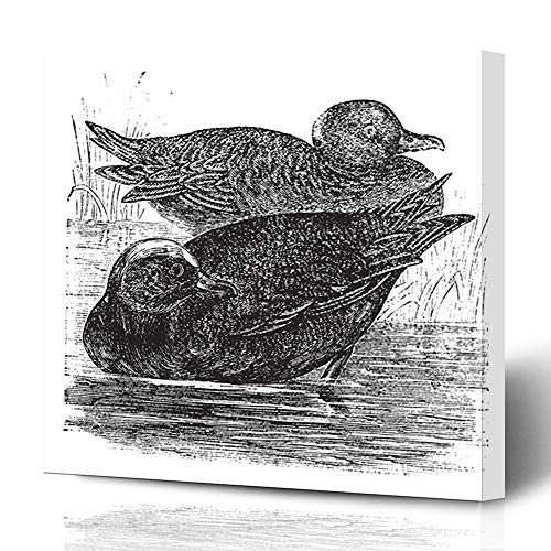 Ahawoso Canvas Prints Wall Art 12x16 Inches Nature Ancient Wigeon Anas Americana Vintage Engraving Migratory Old American Antique Aquatic Avian Decor for Living Room Office Bedroom
