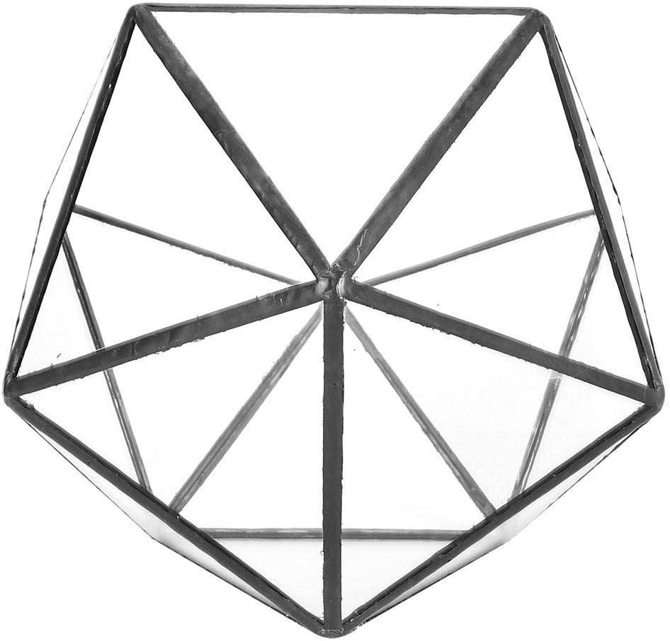 HERCHR Estante de terrario de Vidrio Decoraci/ón Suculentas Plantas de Helecho Musgo Forma geom/étrica Contenedor Soporte de Paisaje