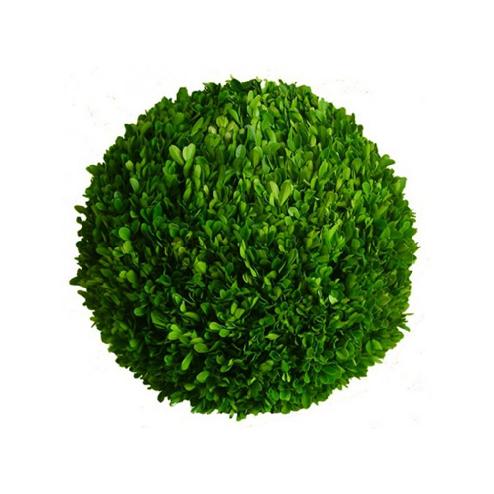 Mills Floral Preserved Boxwood Ball 16'' by Mills Floral