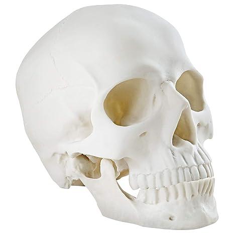 Halloween Skull Decorations.Winchance Halloween Decorations Life Size Skeleton Skeleton Skull Decor Graveyard Outdoor Halloween Home Decor Gift Amazon In Garden Outdoors