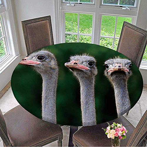 3 Placemat Man Spider (Mikihome Picnic Circle Table Cloths Three Ostrich Heads Closeup with Funny Looking Expressions for Family Dinners or Gatherings 47.5