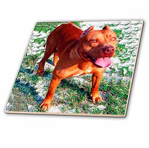 3dRose ct_1045_4 American Pitbull Ceramic Tile, 12-Inch